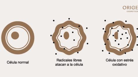 Radicales libres en la piel